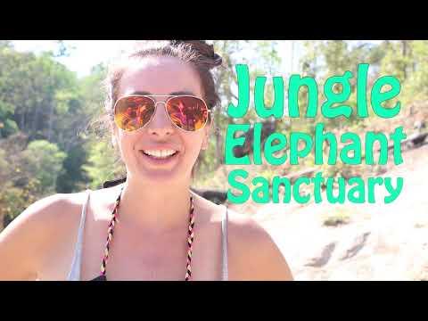 jungle-elephant-sanctuary---chiang-mai-thailand---ethical-&-sustainable-eco-tourism-project