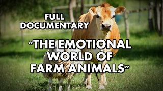 The Emotional World of Farm Animals | Full documentary