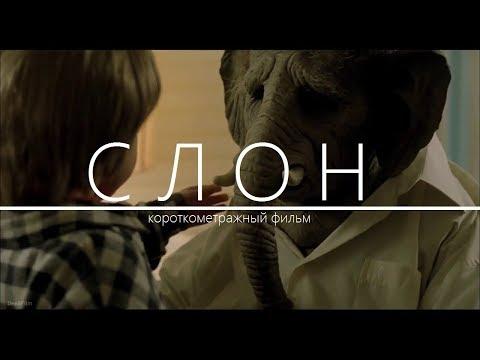 ???? Слон. Короткометражный фильм. Драма. Фантастика.