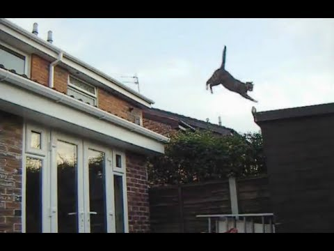 Cat Jump. Cute Cat does Awesome Roof Jump