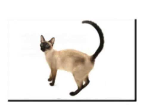 cat dancing the ding dong song
