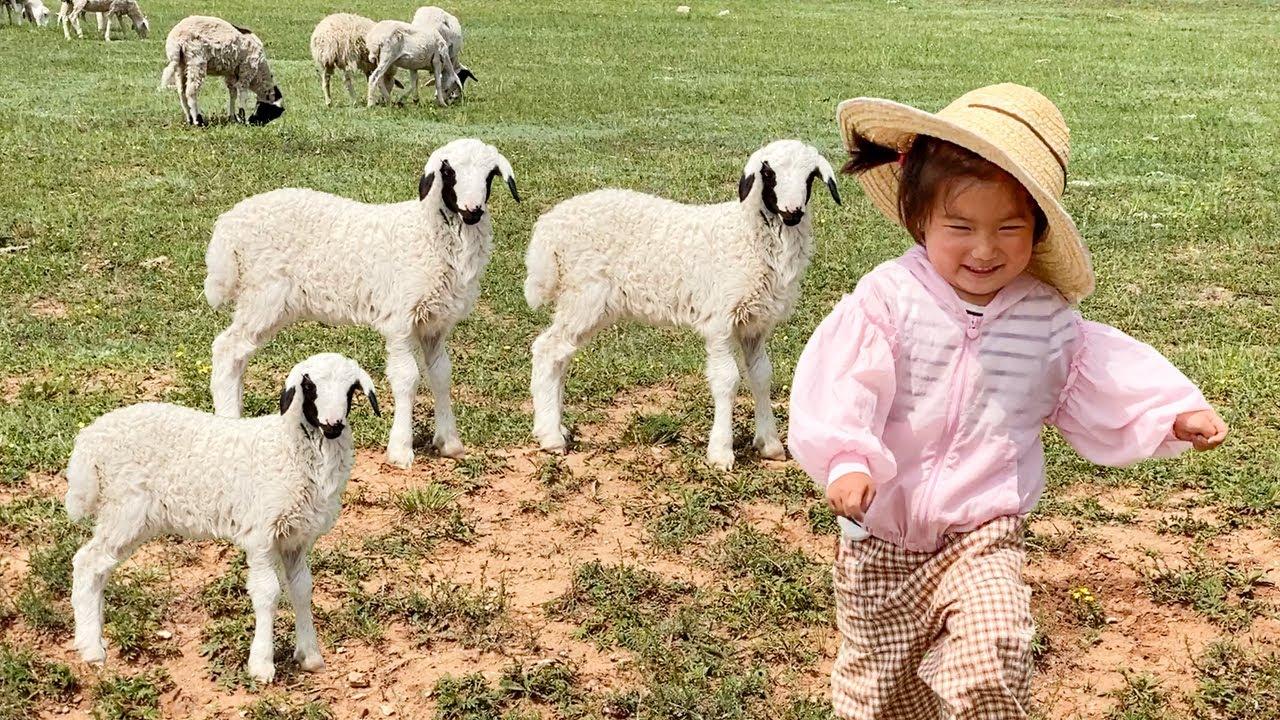 小苏打草原旅游,做一天小羊倌,还是第一次认识羊儿高兴又兴奋 【三丰&小苏打】