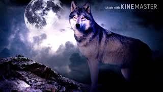 Все мои волки