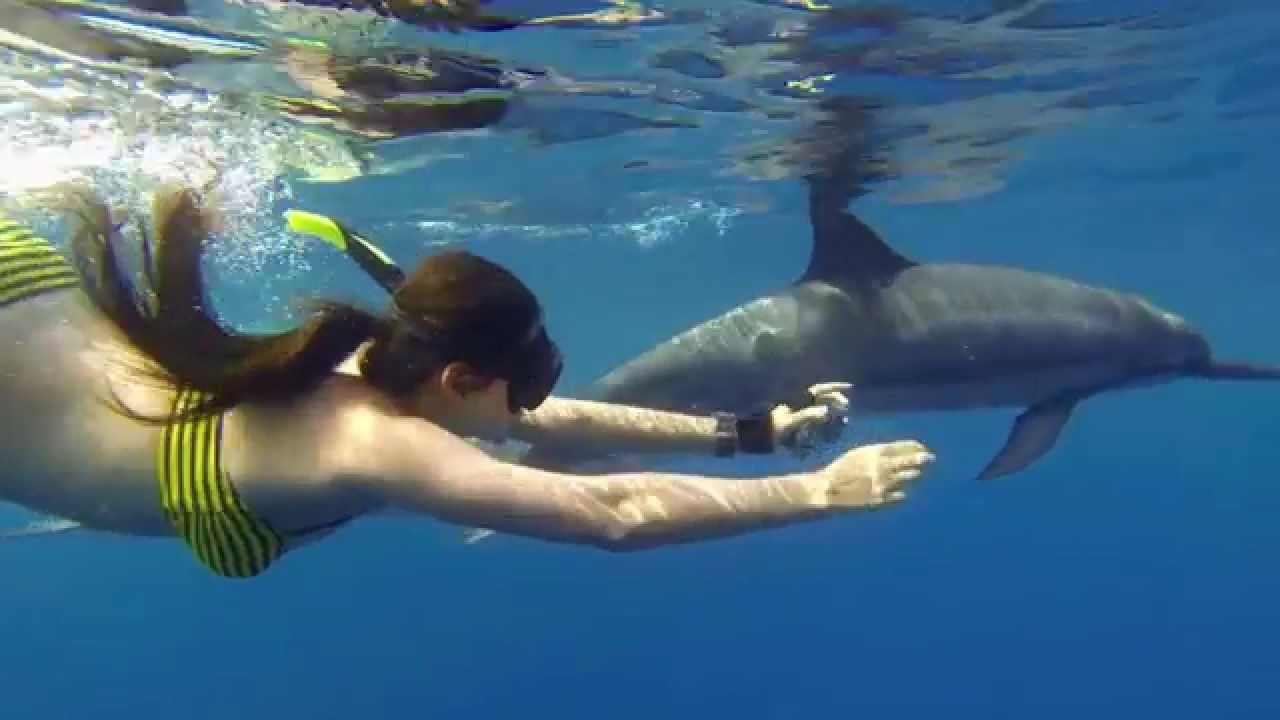 Swimming with wild dolphins kona hawaii youtube for Swimming images