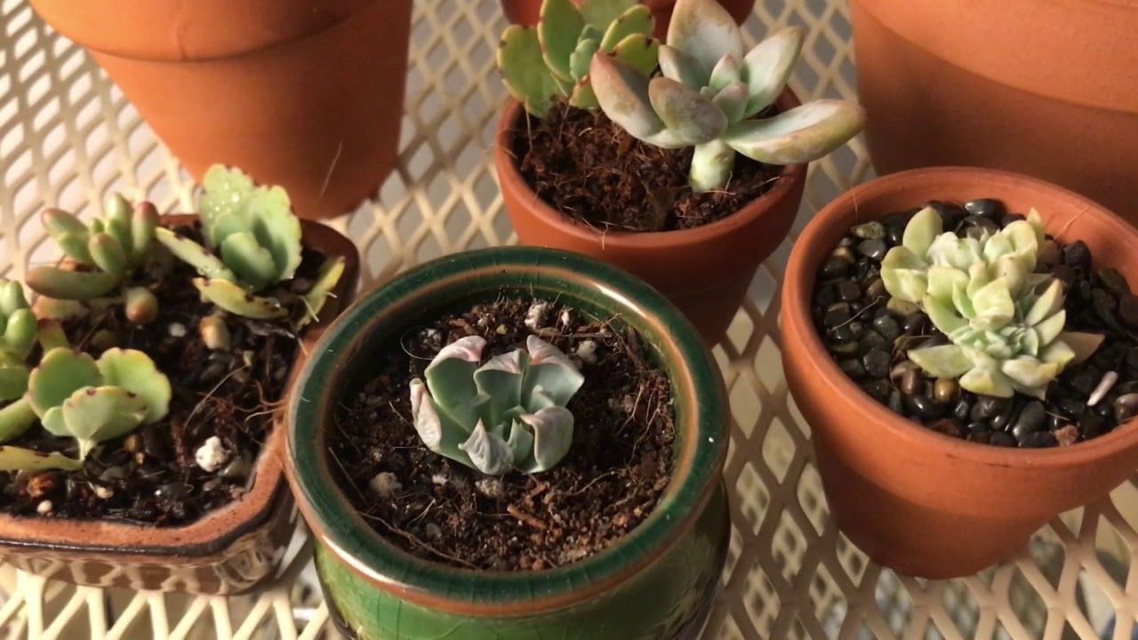 New Growing Lights Test On Succulents Part 1