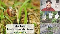 Puutarhanhoito – Lehtokotiloiden hävittäminen puutarhasta