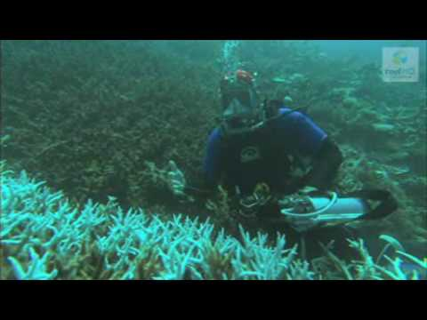 Climate change impacts on coral reefs (Great Barrier Reef Marine Park Authority)