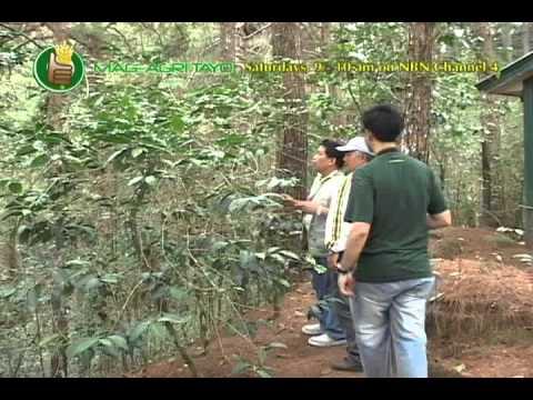 Arabica Coffee Research & Dev't in Cordillera Administrative Region; Coffee Production Technologies