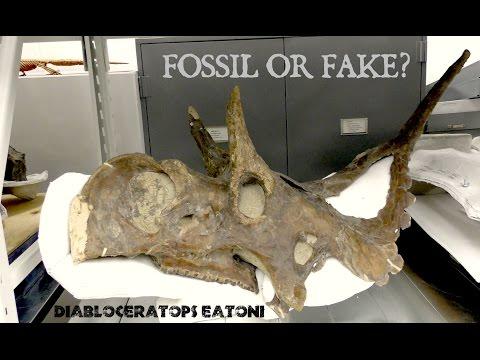 Fossil or Fake? Horned Dinosaur Skulls at NHMU