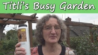 Death to Earwigs - Titli's Busy Garden 2013 Week 39