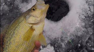Ice Fishing Early Ice Panfish
