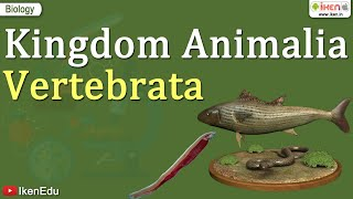 Kingdom Animalia ~ Vertebrata