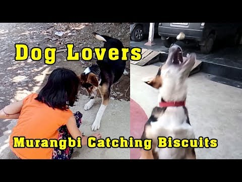 Murangbi - Puppy Catching the Biscuits || Dog Lovers Series Part 4