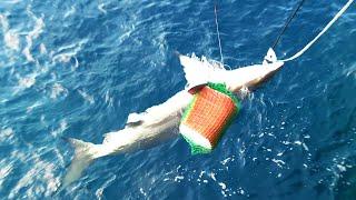 一瞬でサメの体力を奪う1万号の巨大仕掛け!【沖縄1熱い磯で大物狙い!#7】