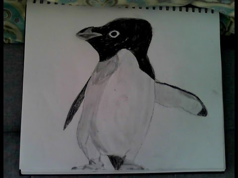 VEDA 9: Drawing an Adelie Penguin
