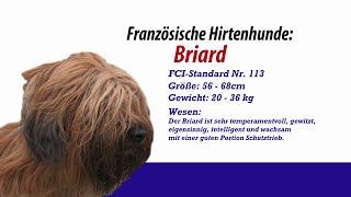 Französische Hirtenhunde Briard - Meister Petz Tv Rasseportrait Mpt 129