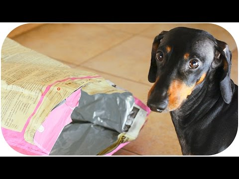 Daschhund is getting inside the dog food package | You're not you when you're hungry