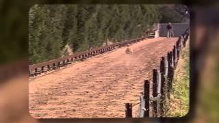 Greyhound Racing Victoria - An Insight Into Allan Britton's Training Methods