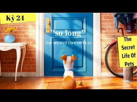 [HỌC IDIOM QUA PHIM] - So Long (phim The Secret Life Of Pets)