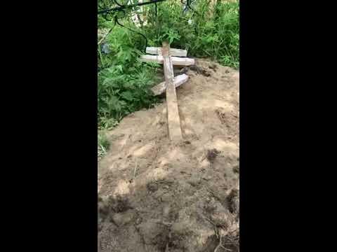 На Камчатке медведи раскапывают могилы на кладбище