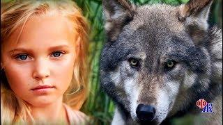 Самый большой ВОЛК из стаи двинулся навстречу девочке - она же пристально смотрела хищнику в глаза