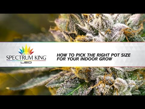 How To Pick The Right  Pot Size For Your Indoor Grow | Spectrum King LED Knowledge