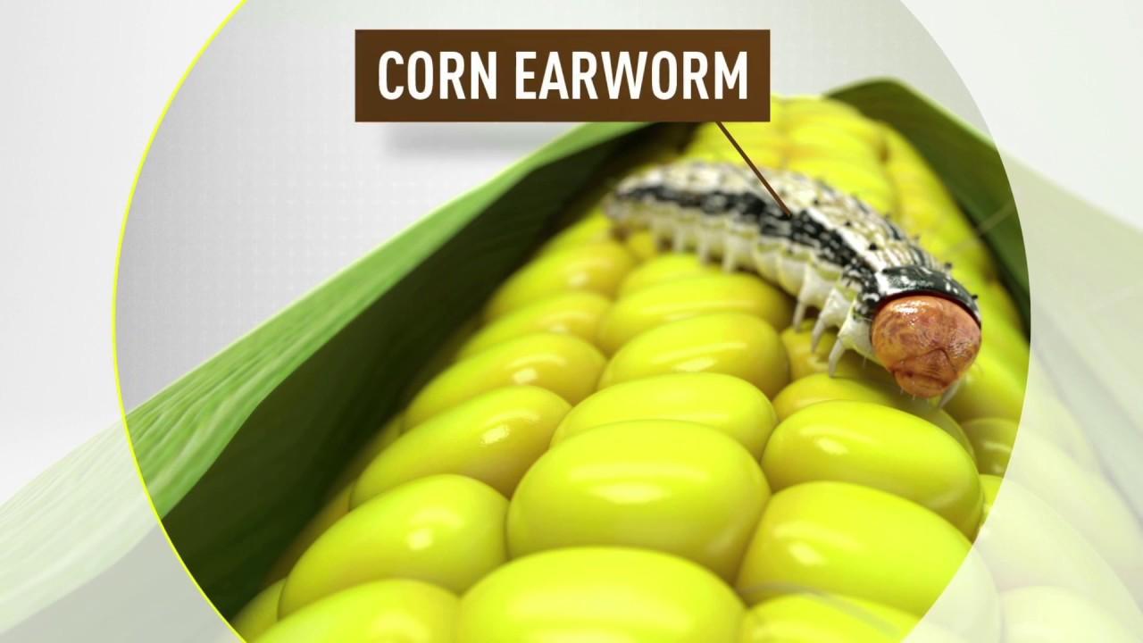 VT Double PRO® RIB Complete® corn blend - YouTube