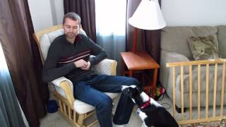 Positive reinforcement using calming signals for dog socialization to calm fear.