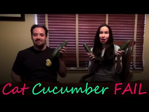 Cat Cucumber Test - Do They Really Scare Cats?
