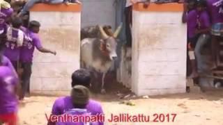 Venthanpatti jallikattu 2017