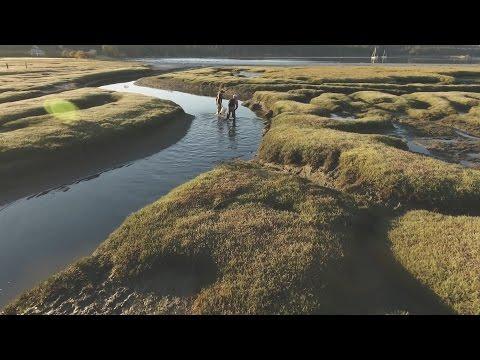 Green Crab Invasion Hits Puget Sound