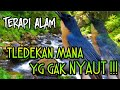 Pasti Nyaut Pancingan Tledekan Malas Bunyi  Mp3 - Mp4 Download