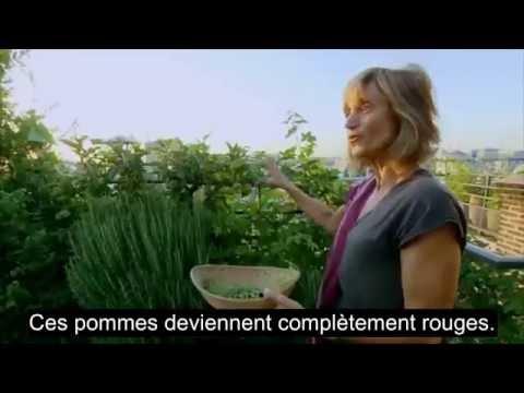 Apprendre le français - Un jardin bio sur les toits de Paris