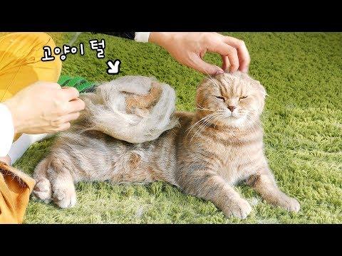 힐링 고양이 4마리 장갑으로 털을 빗겨보았다!