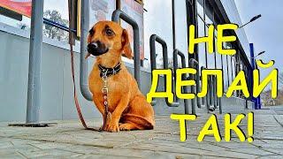 НЕ оставляйте собаку у магазина!