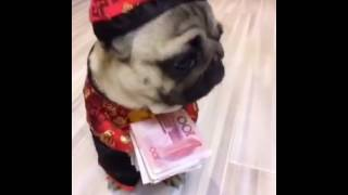 Chinese New Year Lucky Money Dog