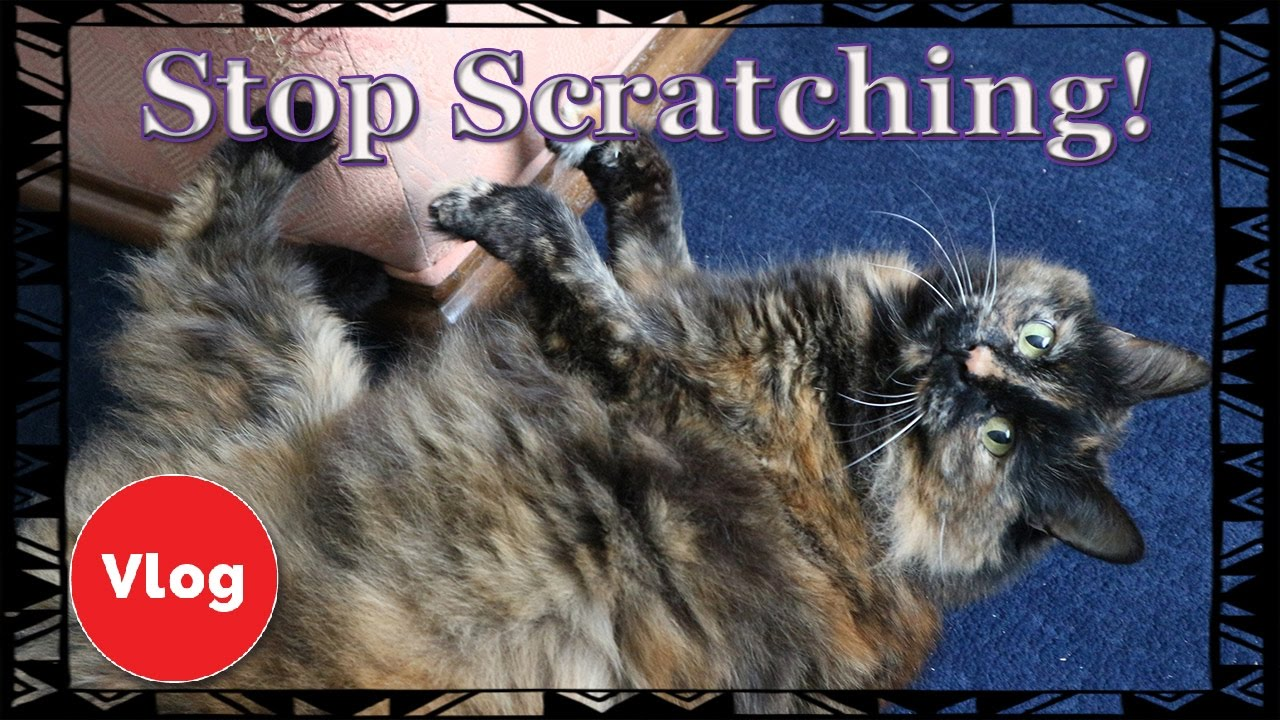 How To Make Your Cat Stop Scratching Your Furniture! Make Your Own Cat  Repellent Spray + COMPETITION