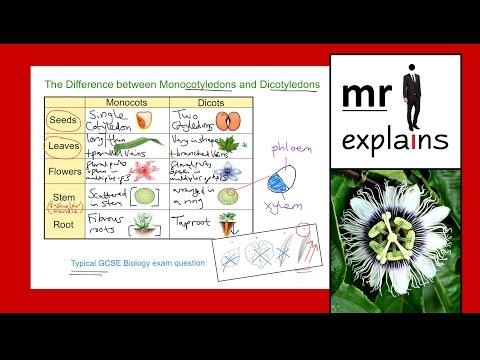 mr i explains: The Difference between Monocotyledons and Dicotyledons