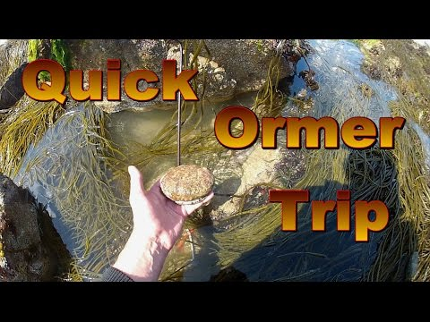 Quick Ormer Trip Guernsey