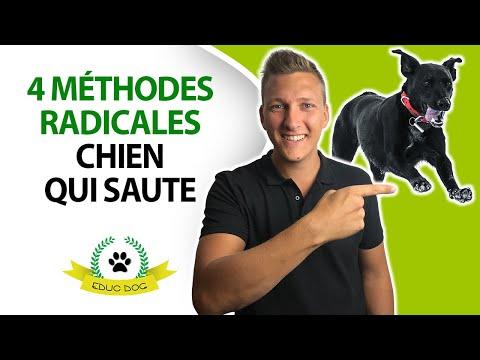 Couper Les Ongles Des Chiens - Quelles techniques ? - 5 étapes - Blog chien