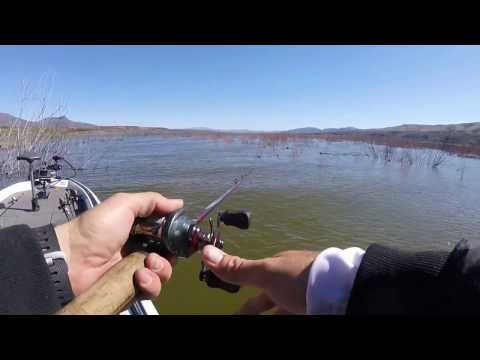 Midweek Tournament At Roosevelt Lake, Arizona