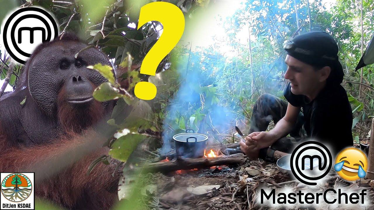 UN COURS DE CUISINE dans la jungle... avec les ORANGS-OUTANS !