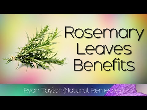 Rosemary Leaves: Benefits and Uses