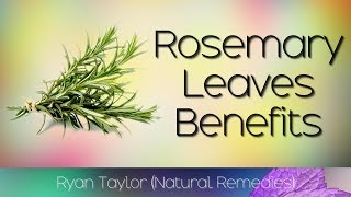 Baixar Rosemary Leaves: Benefits and Uses