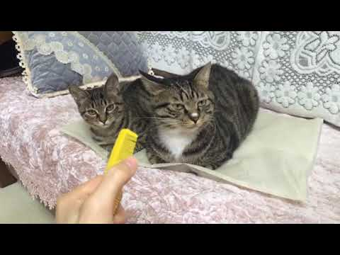【动物天下】话说这样刮梳子猫会有呕吐反应?我试了试结果高清版