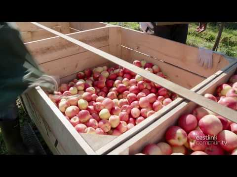 Lutz Family Farm (apples) on Maritime Made - Eastlink Community TV