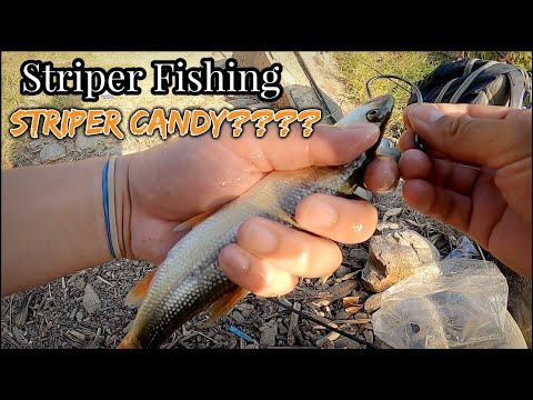 Freeport Striper Fishing