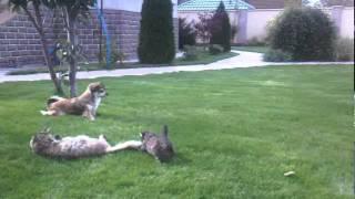 Котёнок защищает МамуМусю