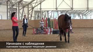 Практические уроки по основам гимнастической работы с лошадью