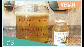 чайный гриб или комбуча Kombucha очень полезно и вкусно